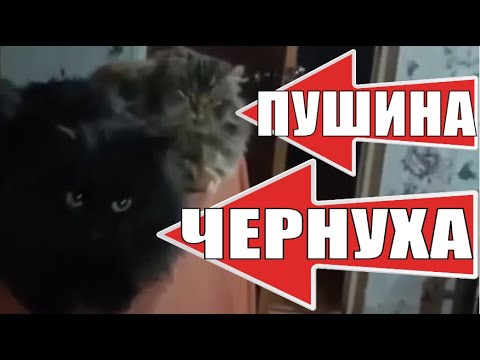 Деревенские кошки Пушинка и Чернуха / Village cats