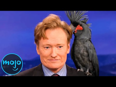 Top 10 Funniest Animal Moments on Talk Shows!!!