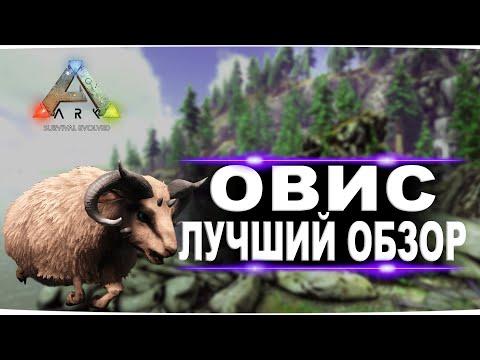 Овис (Ovis) в АРК. Лучший обзор: приручение, разведение и способности  овцы в Ark.