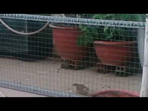 Aviary-Lồng chim ngoài trời