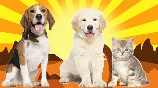 Animals for kids - Farm animals learn names and sounds for Kids, Part Adv 1-2