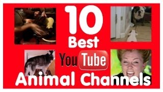 10 Best YouTube Animal Channels