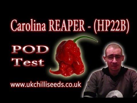 Carolina Reaper Hp22b 39 New Guinness World Record Hottest