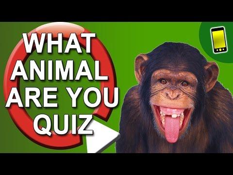 What Animal Am I? Quiz