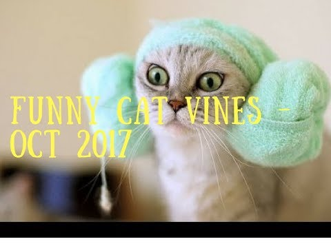 Funny Cat Vines October 2017 - http://JustFunStuff.me