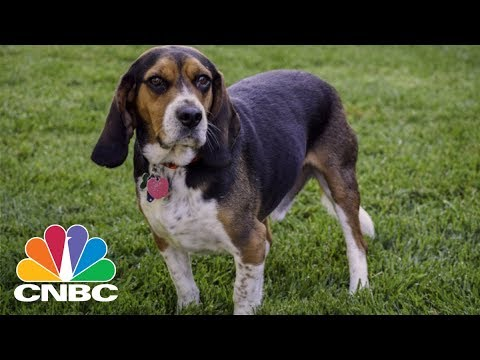 The Tech Behind The $69 Billion Pet Industry | CNBC