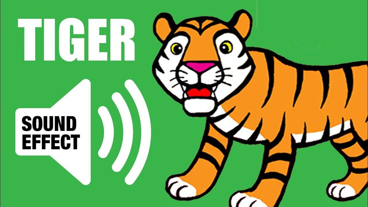 Tiger Sound Roar And Animation Youtube