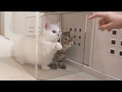고양이들이 붕어빵을 훔쳐먹다가 감옥에 가게 되었어요