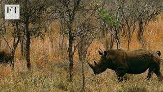 Big Game, Big Money: Inside the illegal wildlife trade