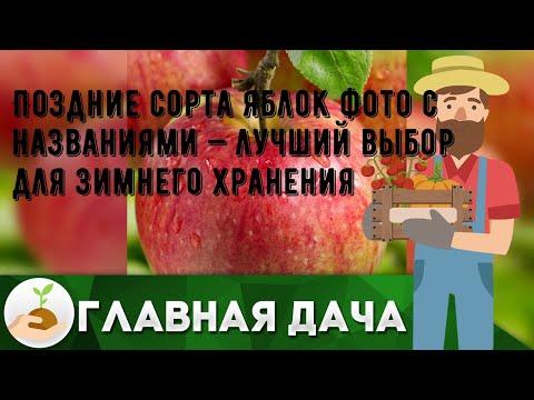 Поздние сорта яблок фото с названиями — лучший выбор для зимнего хранения