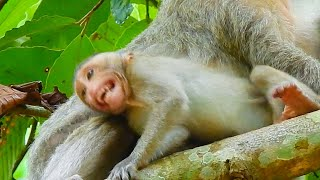 Deeply Angry mom ! Baby Saki crying seizures loudly by angry mom block milk not care