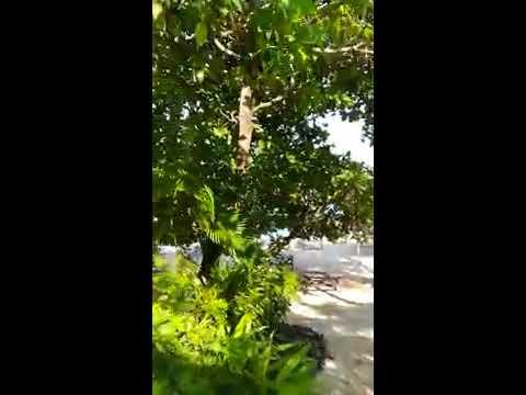Vanuatu - Port Vila - Hideaway Island Resort - Walk from Bungalow to Restaurant - December 2017