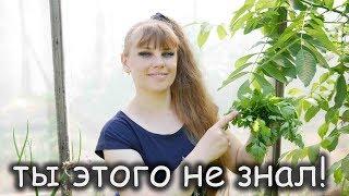 Все Тонкости и Хитрости выращивания ПЕТРУШКИ!!!