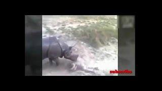 Схватки животных в дикой природе видео на смерть. animal fights to death