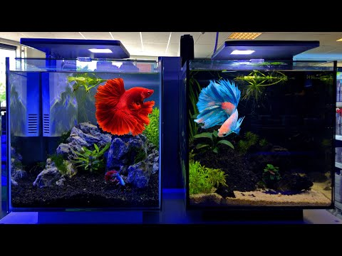 Betta Tank Setup Ideas - Betta Fish Tank Setup