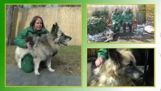 Hundevermittlung - März/april 2013 | Tierheimtv Hannover