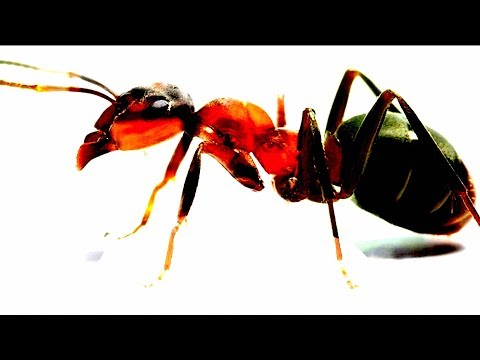 How to remove ants from your Laptop or Macbook