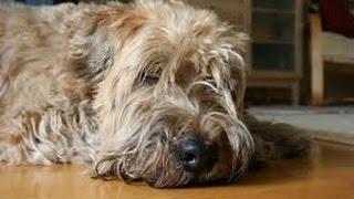 Блог Светланы 18: Собака в доме - что с этим связано.