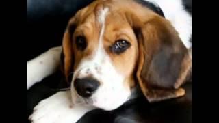 Я так хочу собаку