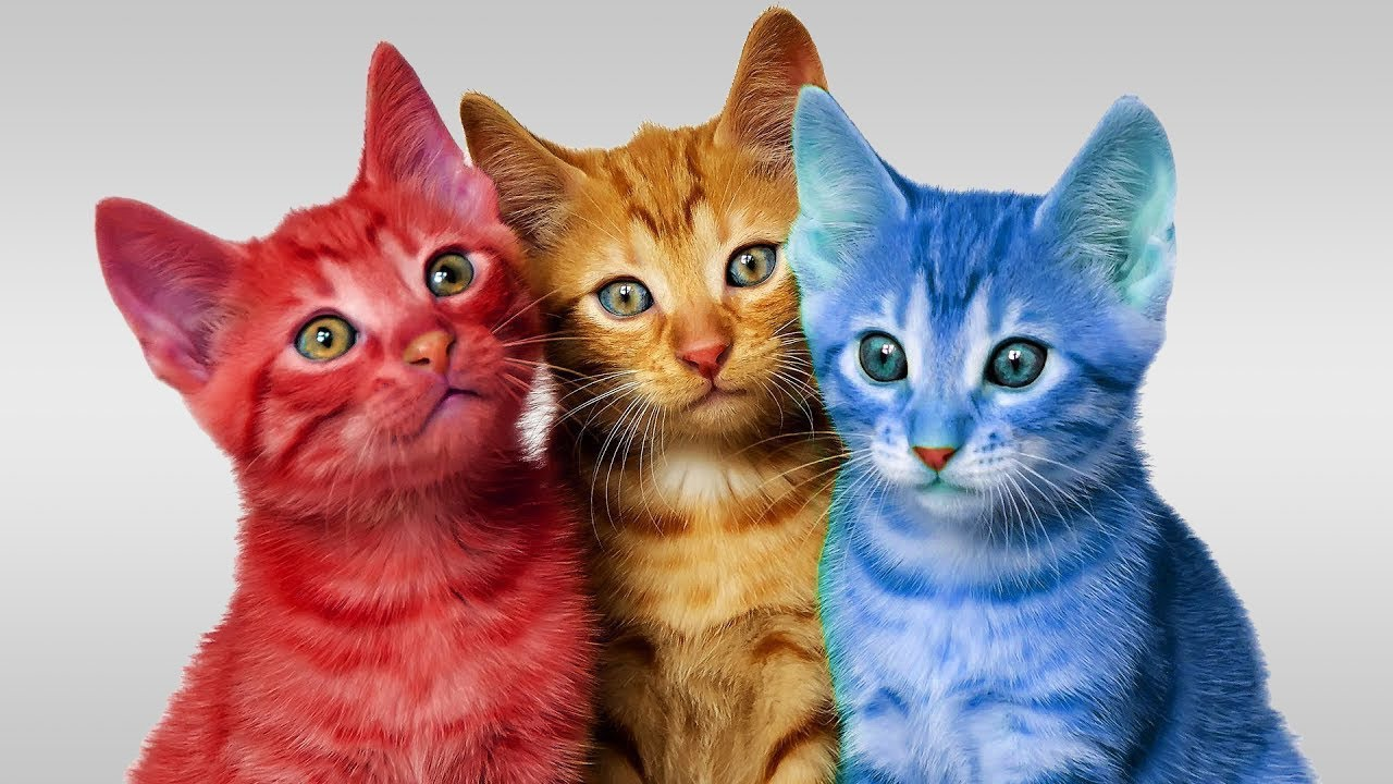 Learn Colors Cute Kitten Cat Colorful Learning Color Video ...