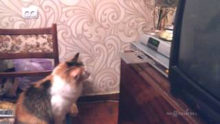 Wy cats hates CD-ROM? Почему кошки не любят CD проигрыватели?
