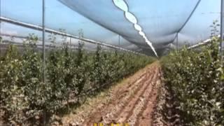 Интенсивные фруктовые сады(, 2013-04-10T13:12:12.000Z)