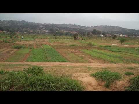 Bas-Congo Farm Co-op