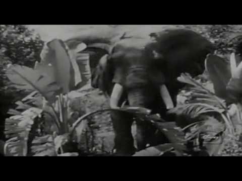 Jungle Cruise presented by Walt E. Disney [Virtual Tour]
