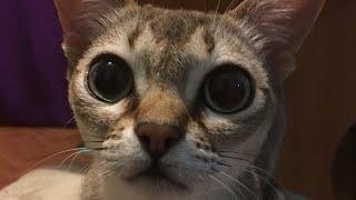 Пустые баночки/Прикол/ Попкорн из гречки/ ПП завтрак/ Маска для лица/ коты в шоке/ что я ем