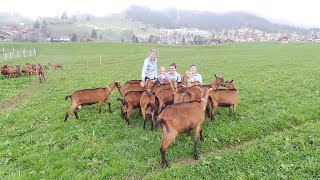 Leysin/VD: La chèvrerie de la famille Perreten
