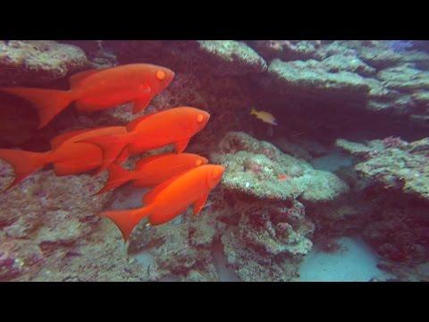 Scuba Diving The Andaman Sea In Thailand