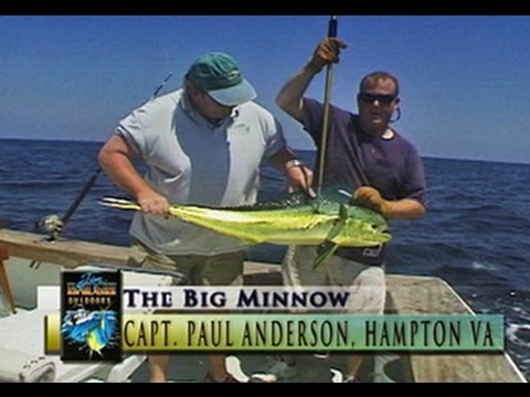 Jim Baugh Outdoors Offshore on the Minnow2 Dolphin, Kings, Spanish