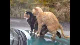 Two cats humping!!!