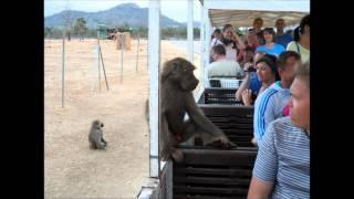 Safari Park in Mallorca