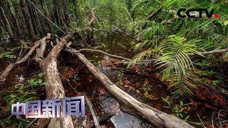 [中国新闻] 亚马孙雨林树木损失速度惊人   CCTV中文国际