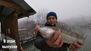 Рыбалка мечты Судак щука сом карп на спиннинг зимой на Кубани Попали на бешеный клев