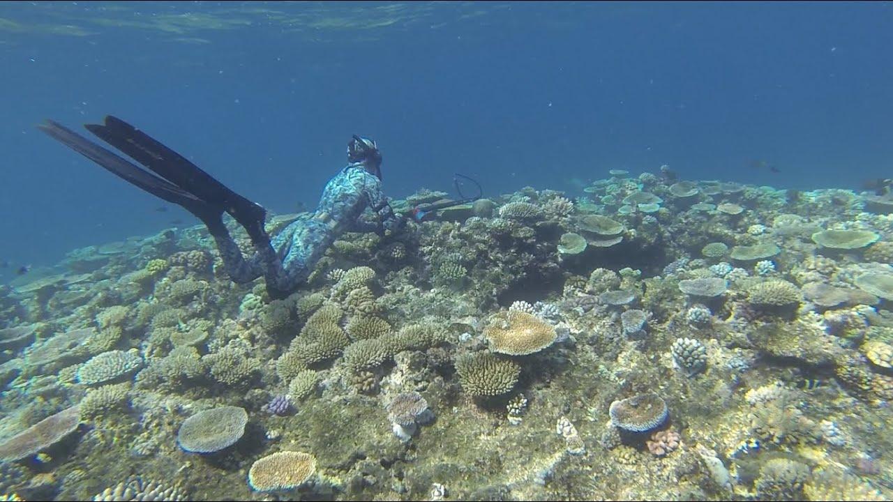 Dunk Island Holidays: Spearfishing Australia- The Reefs Of Mission Beach