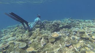 Spearfishing Australia- The reefs of Mission Beach