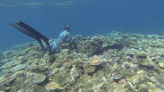 Spearfishing Australia- The reefs of Mission Beach