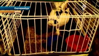 Кроликов-великанов, задержанных в аэропорте, требуют депортировать