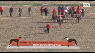 Final del campeonato de España de Galgos en Campo (03/02/2017)