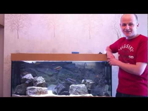 How to Aquarium Maintenance - African Cichlids