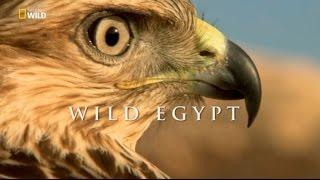 Mısır'ın Vahşi Doğası (Belgesel)