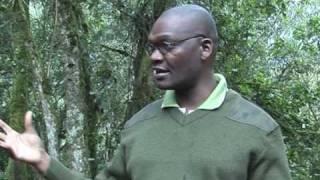 """video-arabicLes gorilles d'Ouganda, nouveaux """"amis"""" sur internet"""