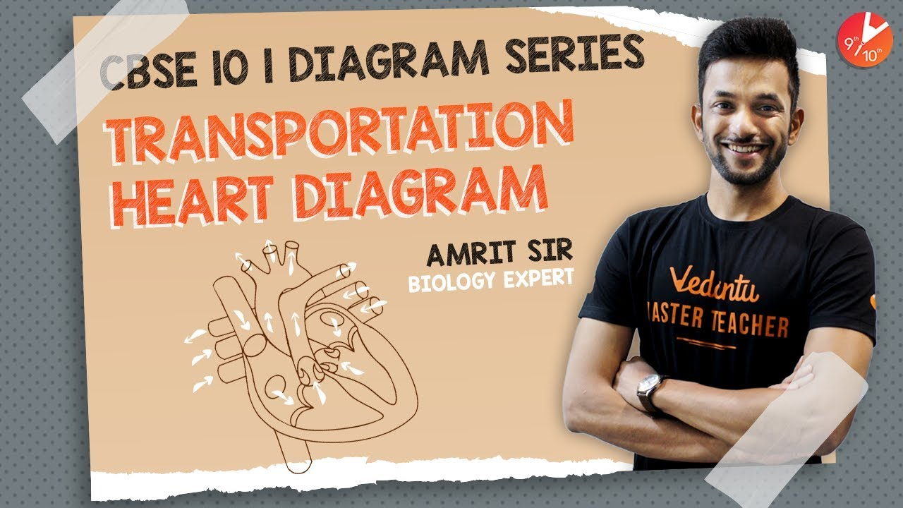 Transportation Heart Diagram Series | Life Process Biology ...