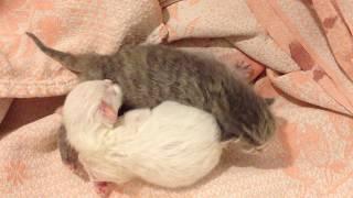 Новорожденные котята.