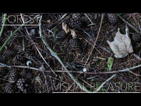 Forest -VISUAL PLEASURE