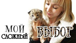 О том, как я выбирала себе котёнка рыси / How I chose a lynx kitten