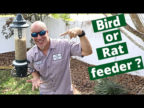 How Bird Feeders Attract Nuisance Wildlife To Your Yard