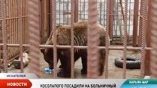 Нарьян-марский Мишка сел на больничный